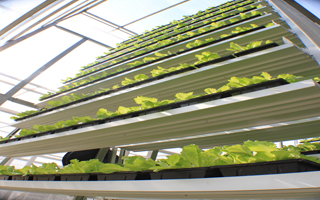 Sensor data helped advance the productivity of SkyGreen's vertical farm by 20%